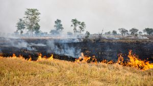 Crop stubble burning