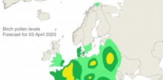 Birch pollen forecast 03 April 20