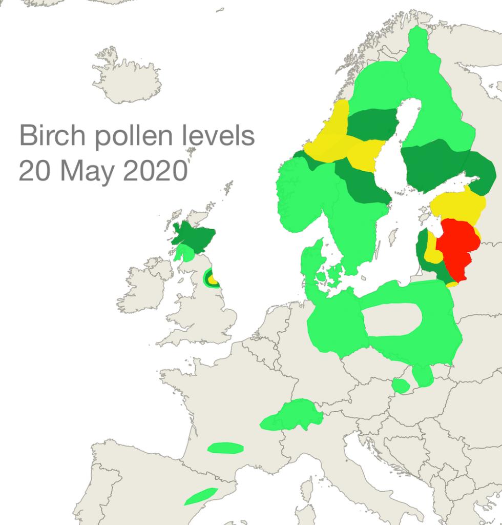 Birch pollen 20 May 2020